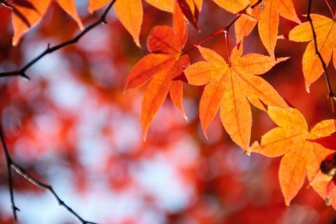 11月のイメージ 紅葉